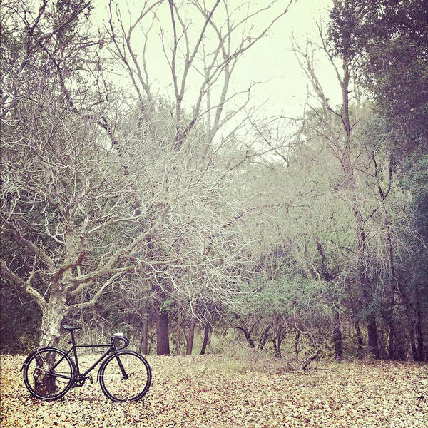 Stationary Photograph - Bicycle Awaits At Entrance To Forest by Joey Celis