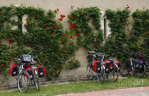 Bicycle Rack Photograph - Bicycles Parked By The Wall by Louise Heusinkveld