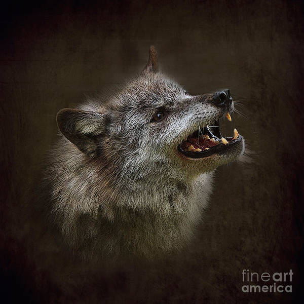 Growling Wall Art - Photograph - Big Bad Wolf by Louise Heusinkveld