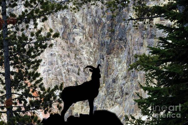 Photograph - Big Horn Sheep Silhouette by Dan Friend