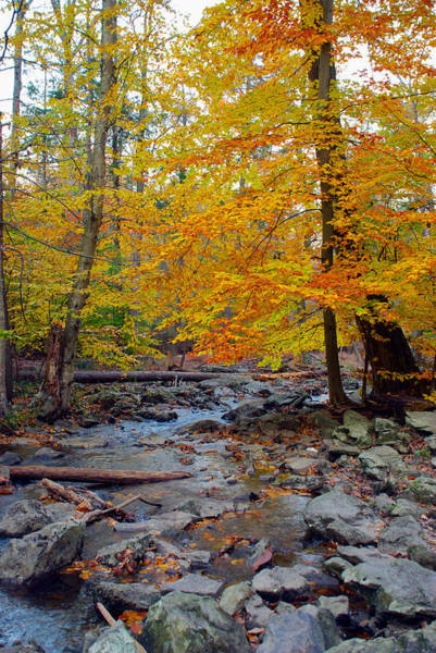 Photograph - Big Hunting Creek Down Stream From Cunningham Falls by Mark Dodd