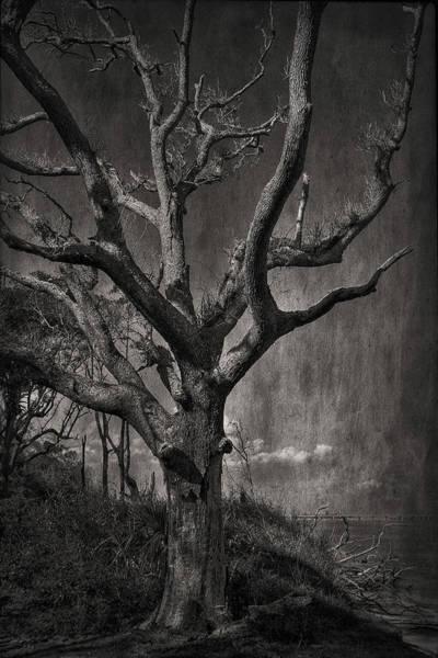 Photograph - Big Talbot Island by Mario Celzner