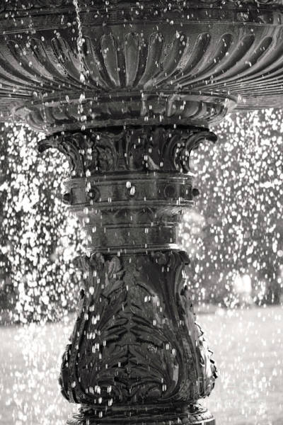 Photograph - Bird Fountain Of Tears by Traci Cottingham