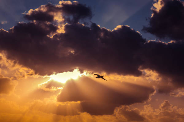 Bird In Sunrise Rays Art Print