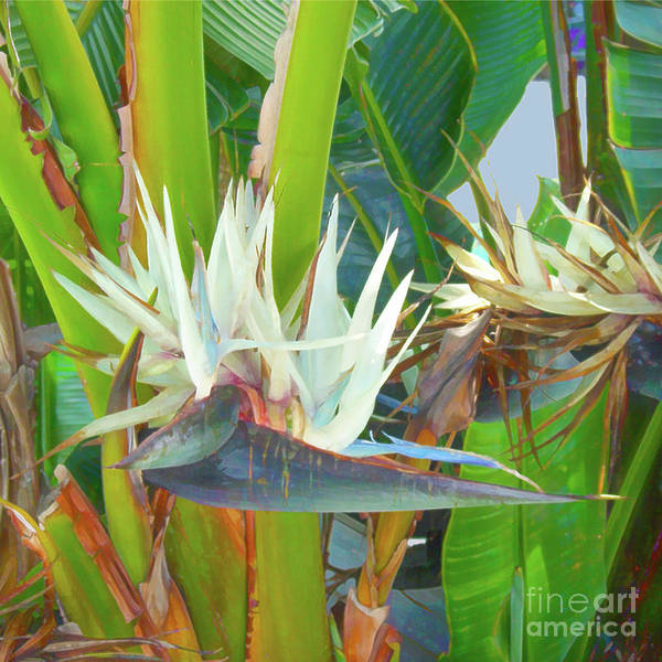 Photograph - Bird Of Paradise by Photographs In Motion