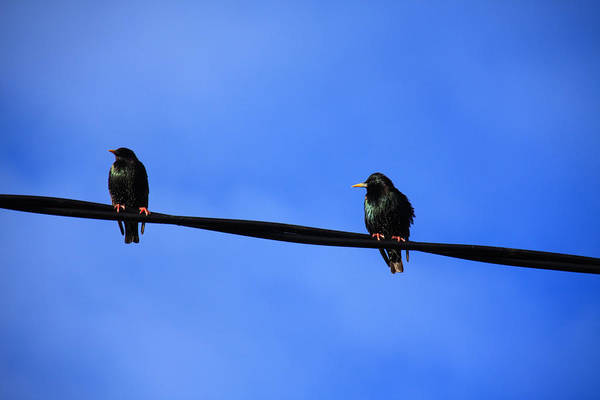 Photograph - Bird On A Wire by Aidan Moran