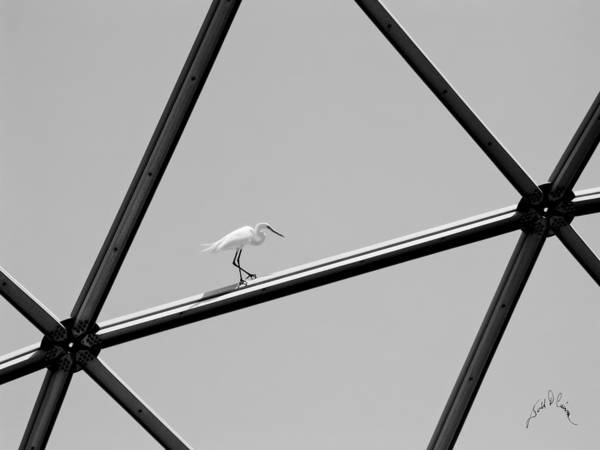 Photograph - Bird On Structure by Williams-Cairns Photography LLC