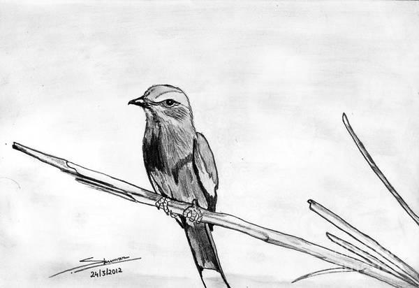 Grey Skies Drawing - Bird by Shashi Kumar