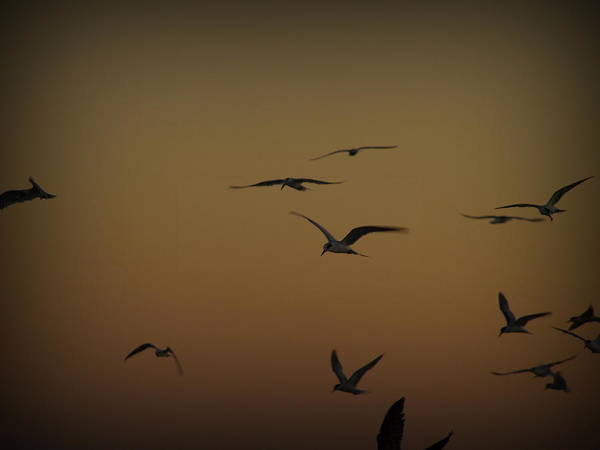 Photograph - Bird Sky by James Granberry