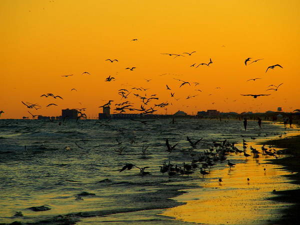 Photograph - Bird Sunset I by James Granberry