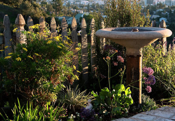 Photograph - Birdbath At Sunset by Lorraine Devon Wilke