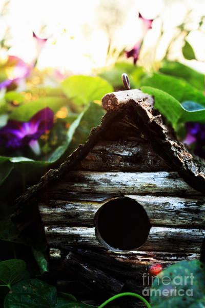 Empty Nest Wall Art - Photograph - Birdhouse by Stephanie Frey
