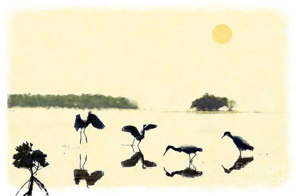 Photograph - birds feeding in the Everglades by Dan Friend