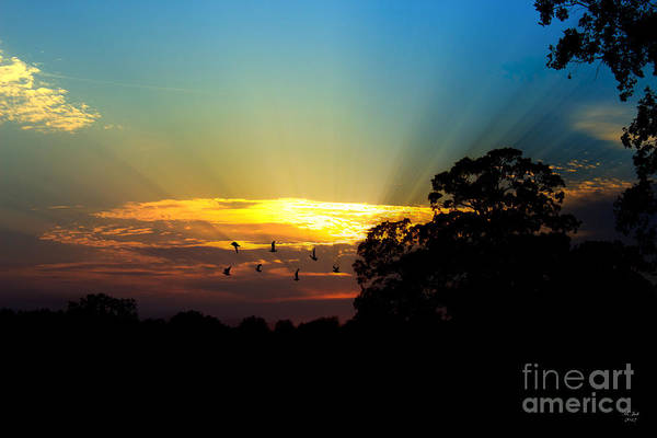Photograph - Birds Flying Sunset by Ms Judi