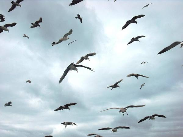 Photograph - Birds In Bodega Bay by Kelly Manning