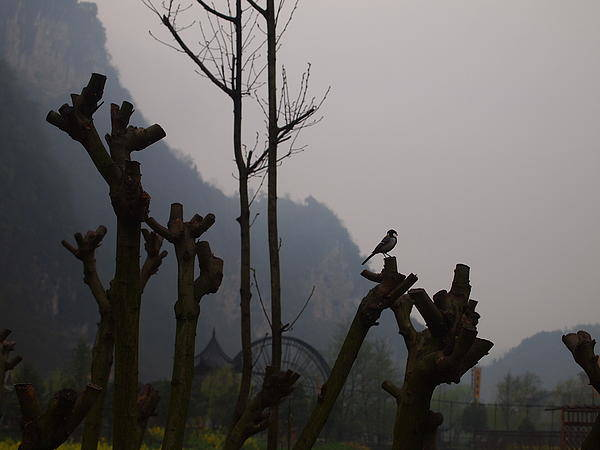 Wall Art - Photograph - Birds In The Mountain by Corey Landers