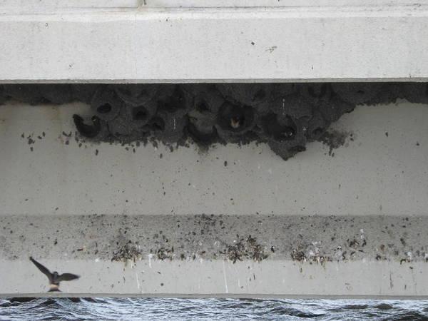 Birds Nest Under The Bridge. Art Print