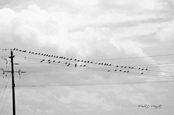 Photograph - Birds On A Wire Infrared by Paulette B Wright