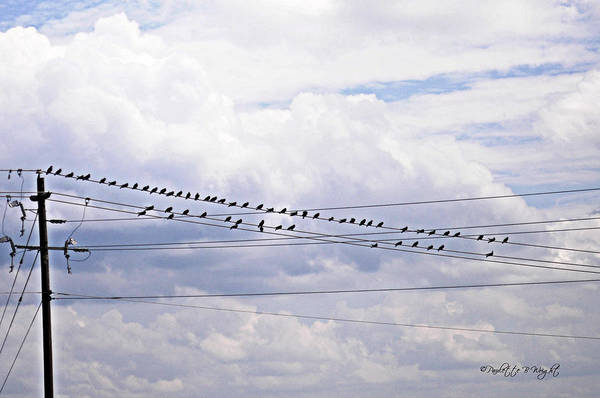 Photograph - Birds On A Wire Pushed by Paulette B Wright