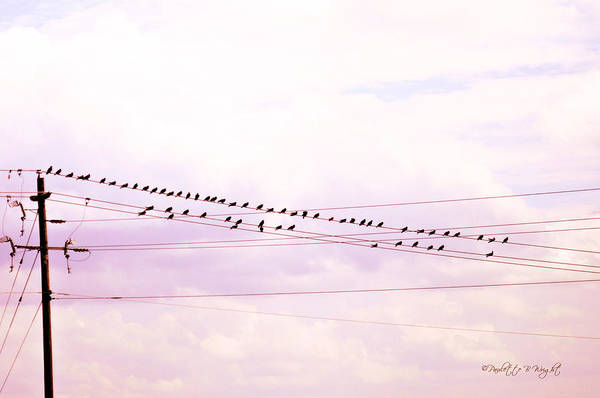 Photograph - Birds On A Wire Red Tint by Paulette B Wright