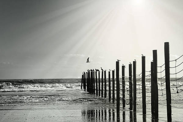 Photograph - Birds On Outer Banks by Mary Almond