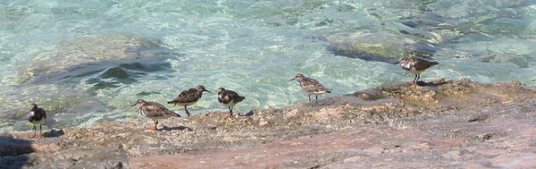 Photograph - Birds On The Seashore by Julia Springer