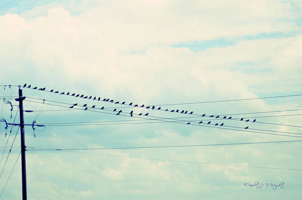 Photograph - Birds On Wires Blue Tint by Paulette B Wright