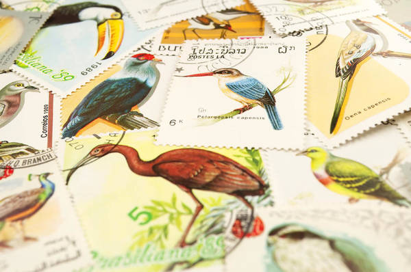 Stamp Collecting Photograph - Birds Stamps by Fernando Barozza