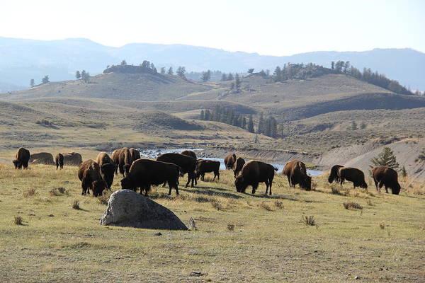 Photograph - Bison Land Yellowstone National Park by Brad Scott