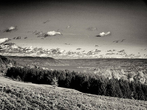 Photograph - Black And White Above The Vines  by Joshua House