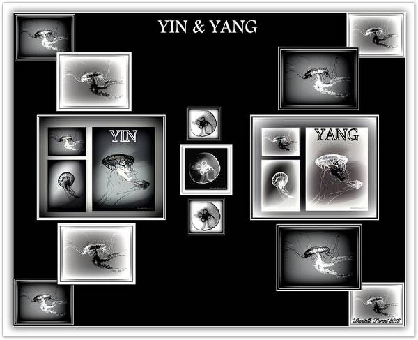 Photograph - Black And White  Yin Yang Jelly Fish by Danielle  Parent