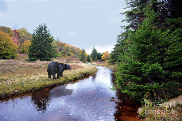 Photograph - Black Bear Beside Stream by Dan Friend
