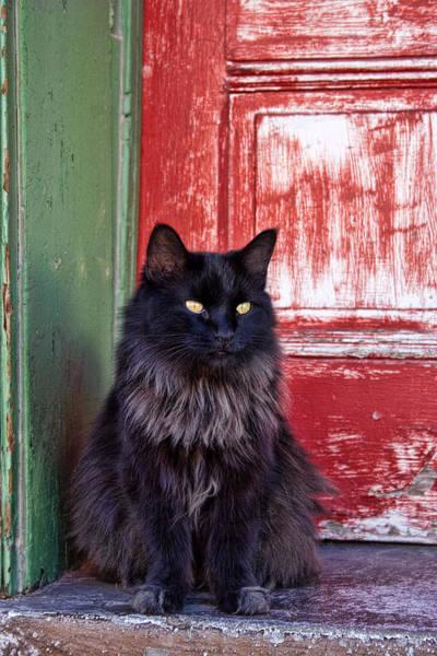 Wall Art - Photograph - Black Cat Red Door by Carol Leigh