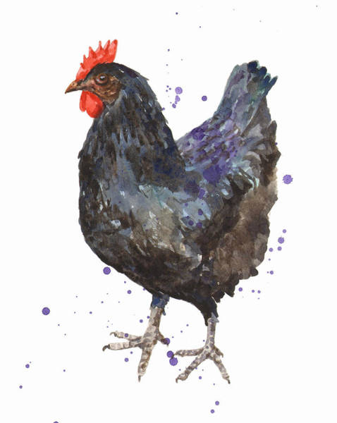 Wall Art - Painting - Black Hen - Rustic Kitchen Art by Alison Fennell