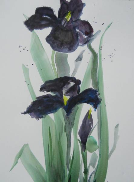 Painting - Black Iris by Audrey Bunchkowski