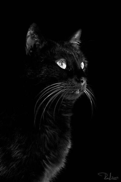 Photograph - Black Portrait by Raffaella Lunelli
