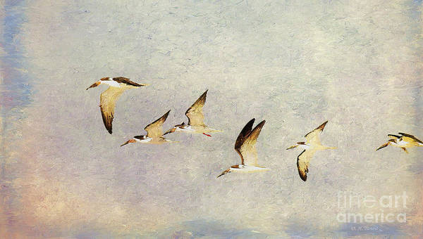 Bird In Flight Digital Art - Black Skimmers On The Move by Deborah Benoit
