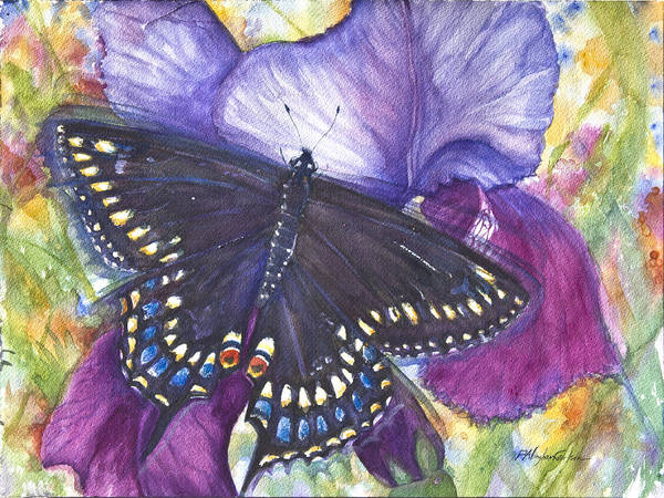 Purple Iris Mixed Media - Black Swallowtail Butterfly by Patricia Allingham Carlson