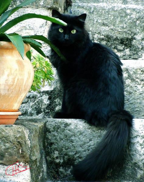 Photograph - Blacky Cat by Colette V Hera  Guggenheim