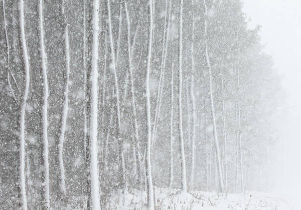 Wall Art - Photograph - Blizzard Blankets Trees In Snow by Douglas MacDonald