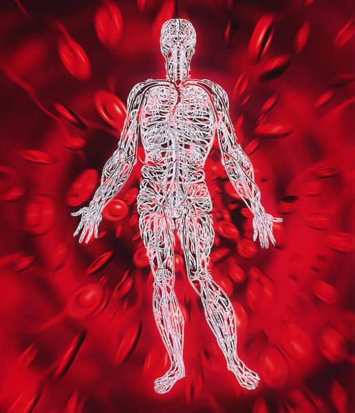De Humani Corporis Fabrica Photograph - Blood Circulation by Mehau Kulyk