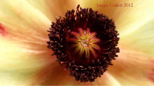 Photograph - Bloom Iv by Jacqui Collett