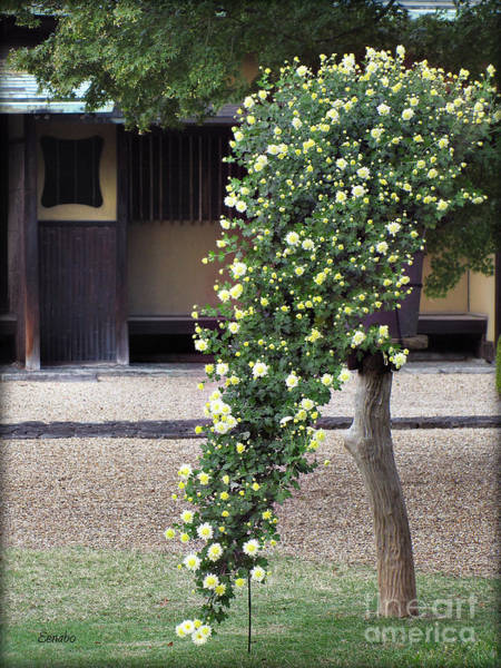 Photograph - Blooming by Eena Bo