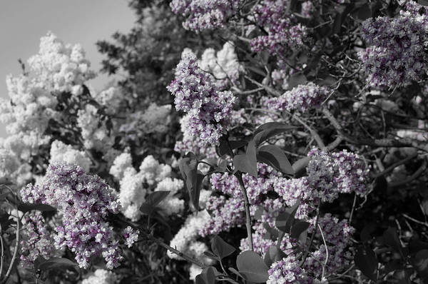 Photograph - Blooms by Colleen Coccia