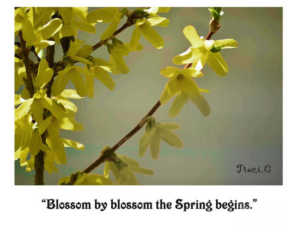 Photograph - Blossom By Blossom by Traci Cottingham