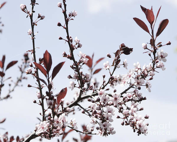 Photograph - Blossoms In Time by Traci Cottingham