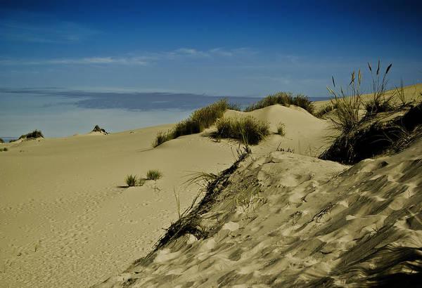 Oregon Dunes Photograph - Blue Above The Dunes by Dale Stillman