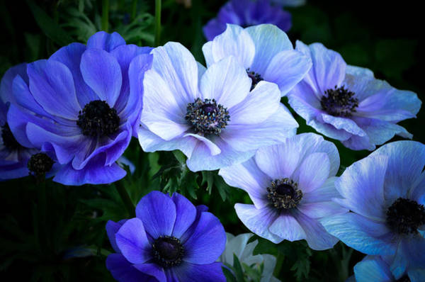 Chicago Botanic Garden Photograph - Blue And White by Julie Palencia