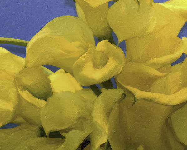 Longwood Gardens Photograph - Blue And Yellow by Trish Tritz