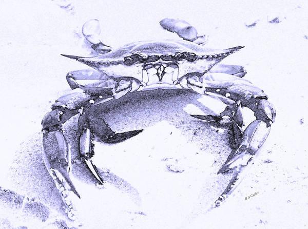 Wall Art - Digital Art - Blue Crab  by Betsy Knapp